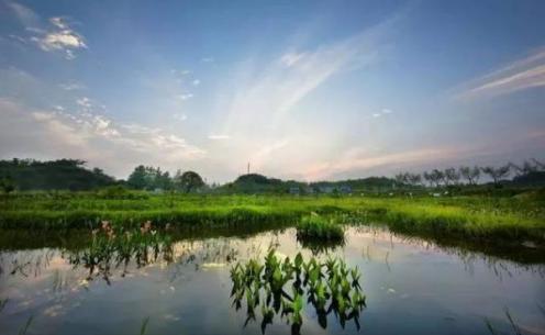 武汉周边游 龙门花海+赤龙湖国家湿地公园 2 日游
